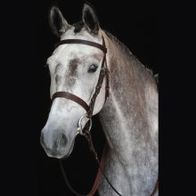 Collegiate Hunt Cavesson Bridle Iv: Brown: Warmblood