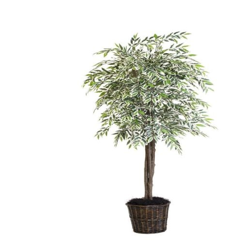 Variegated Smilax Deluxe Everyday Tree with Plastic Container - 6 ft.