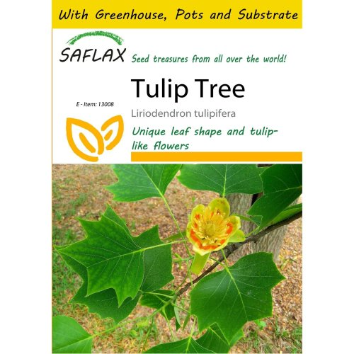 Saflax Potting Set - Tulip Tree - Liriodendron Tulipifera  - 20 Seeds - with Mini Greenhouse, Potting Substrate and 2 Pots