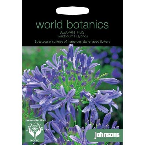 Johnsons World Botanics Flower - Pictorial Pack - Agapanthus Headbourne Hybrids - 20 Seeds