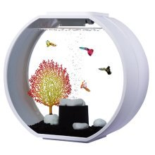 Fish R Fun, Deco Fish Tank 20L White