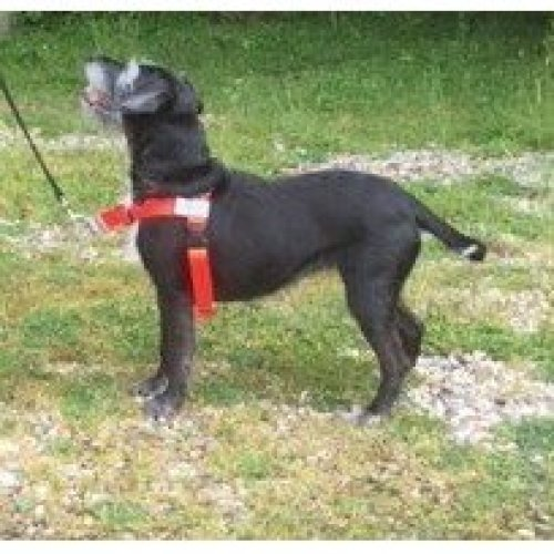 ANTI PULL HARNESS. Front Leading Harness FITTING DOGS WEIGHING 18-35lb (8-16kg) Girth Size 16-24 ins (41-61cms) Sports Edition in HUNTER ORANGE....