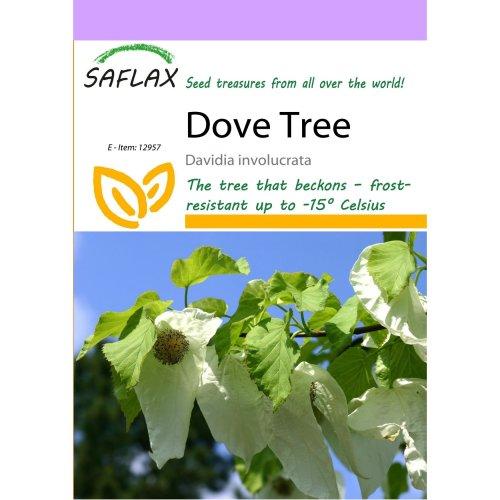 Saflax  - Dove Tree - Davidia Involucrata  - 1 Seeds