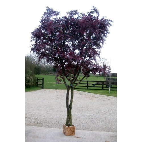 Artificial Silk Maple Tree - 300cm, Red