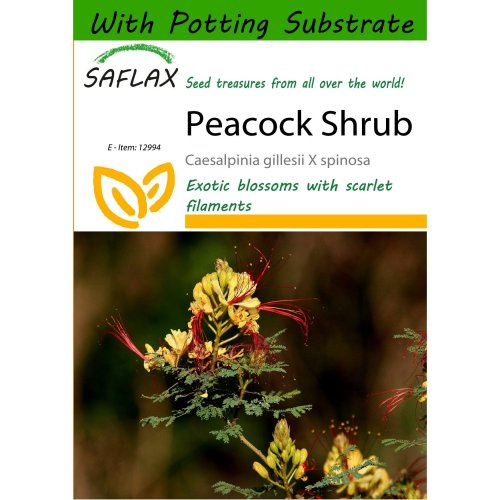 Saflax  - Peacock Shrub - Caesalpinia Gillesii X Spinosa - 10 Seeds - with Potting Substrate for Better Cultivation