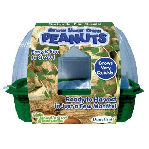 DuneCraft 22856 Grow Your Own Peanuts Plant