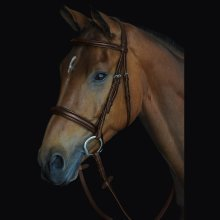 Collegiate Comfort Crown Padded Raised Cavesson Bridle: Brown: Warmblood