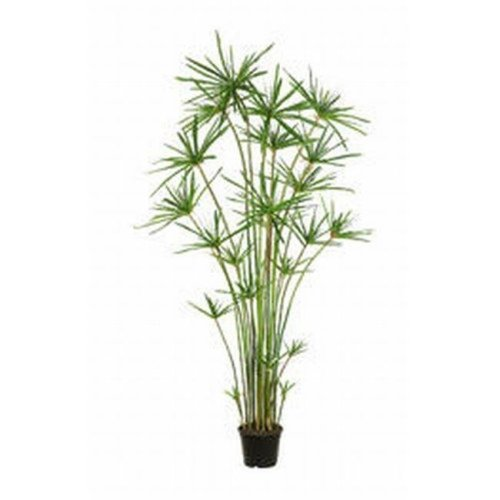 6 ft. Cypress Grass Tree In Pot Green- Case of 1